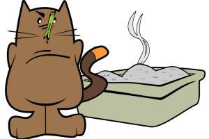 Dessin litière chat